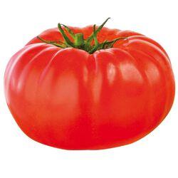 Tomate Cotelée