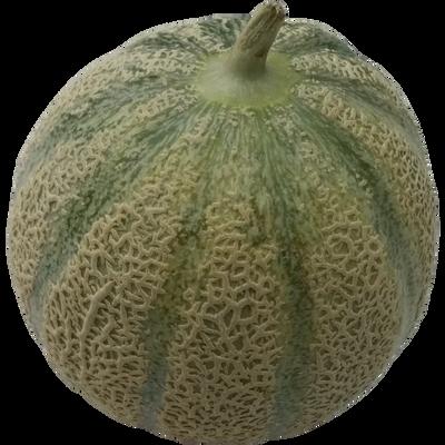 Melon charentais jaune, BIO, calibre 850/1100g, Espagne, la pièce