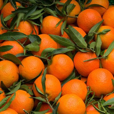 mandarines  feuille