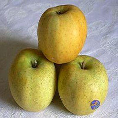 Pomme chanteclerc, France