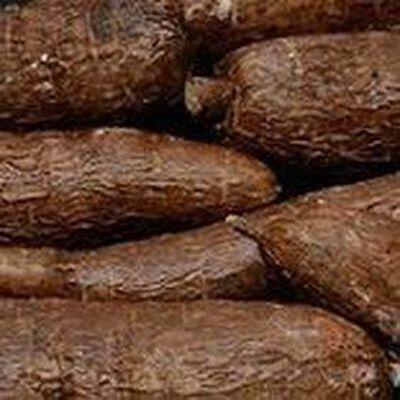 Manioc origine costa rica categorie 1