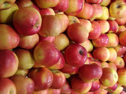 POMME 6 FRUITS BARQUETTE VENDEE