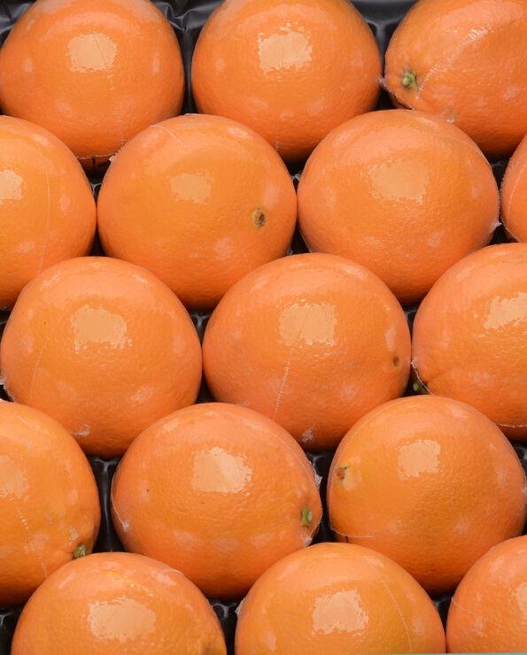 Orange navel, calibre 3, catégorie 1, non traitée après récolte, Afrique du Sud, filmée