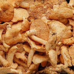 Champignon Pied de mouton vrac Espagne