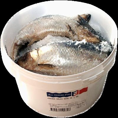 Hareng salé, Clupea harengus, pêché en Atlantique Nord-Est, seau 2kg