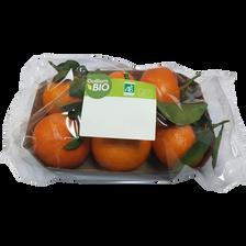 Mandarine murcott à feuille, BIO, calibre 2/3, catégorie 2, Espagne, barquette 500g