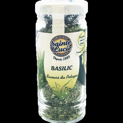 Basilic SAINTE LUCIE