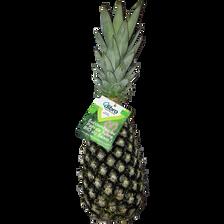 Ananas pain de sucre, BIO, calibre 10, Bénin, la pièce