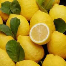 Citron jaune Primofiori, non traité après récolte, calibre 4, catégorie 1, Espagne à la pièce