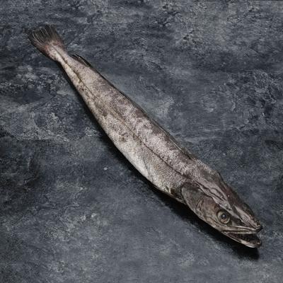 Merlu, Merluccius merluccius, 200/400g, pêché en Mer Méditerranée