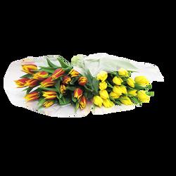 15 tulipes coloris variés France