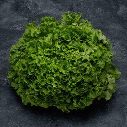 salade batavia, la pièce