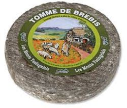 TOMME BREBIS