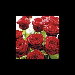 Serviettes splendid roses, 3 plis, 33x33cm, 20 unités