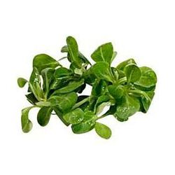Salade Mâche barquette