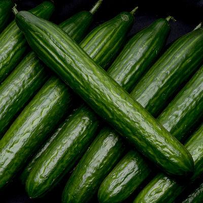 Concombre, calibre 400/500g, Pays-Bas, la pièce