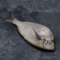 Dorade royale, sparus aurata, calibre 300/500g, pêche Méditerrannée