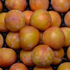 Prune jaune Sun Kiss, calibre 50/55, Afrique du Sud