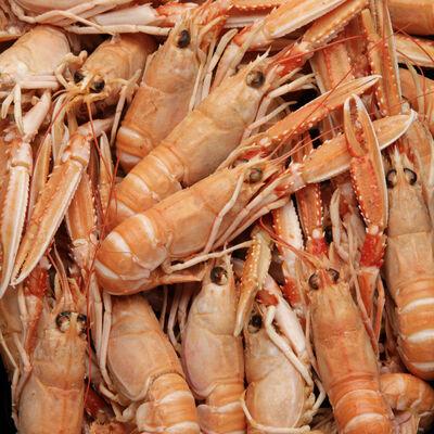 Langoustine cuite 20/30, Nephrops Norvegicus, pêchée en Atlantique Nord-Est