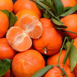 Mandarine Nadorcott, BIO, vrac, calibre X1, catégorie 2, Maroc