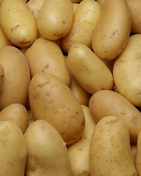 Pomme de terre gren.Allians, de consommation à chair ferme, BIO, 28/35mm, cat.2, Normandie, FRANCE, sht 1kg