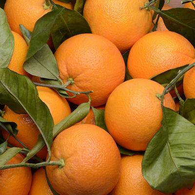 Orange naveline à feuille, calibre 4, catégorie 1, Espagne