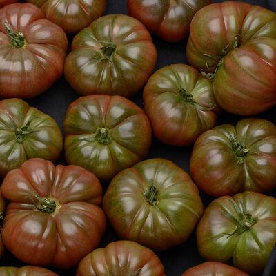 Tomate cotelée, segment Les côtelées, Mamie Blue, Les cailloux, calibre 67/+, cat.2, France