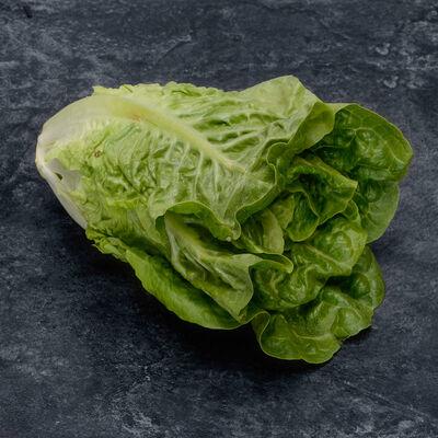 Salade sucrine, Catégorie 1, Espagne, la barquette de 6 pièces