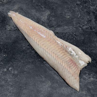 Filet de lieu noir, Pollachius virens, machine, pêché en AtlantiqueNord Est