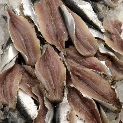Filet de sardine, Sardina pilchardus, Bretagne, pêché Atlantique NordEst