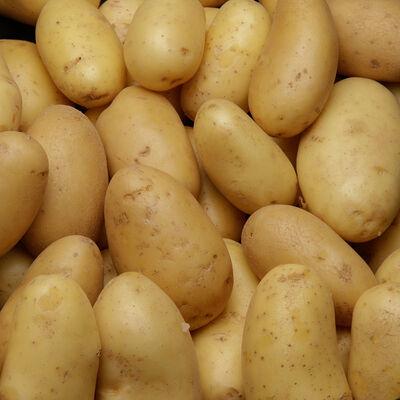Pomme de terre ratte non lavée, de consommation à chair ferme, BIO, calibre 20+mm, catégorie 2, Landes, bq 500g