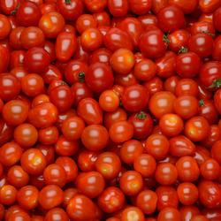 Tomate cerise, segment Les cerises rondes, catégorie Extra, France, barquette, 250g