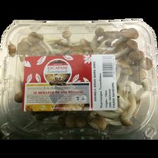 Champignon shimeji brun, Chine, barquette 200g