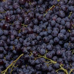 Raisin noir sans pépins Heavenly blue, BIO, catégorie 2, Afrique du Sud