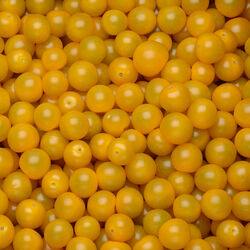 Tomate cerise, segment Les cerises rondes, jaune, catégorie Extra, France