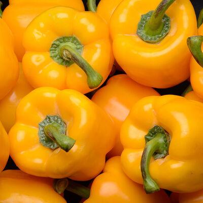 Poivron jaune, Catégorie 1, Espagne, 500g