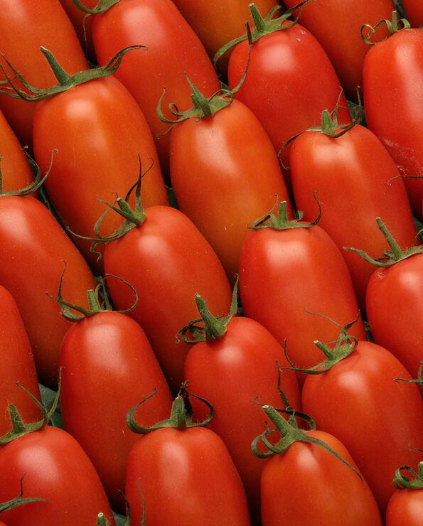 Tomate allongée, segment Les allongées, romaine, SAVEOL, calibre 57/67, catégorie 1, France
