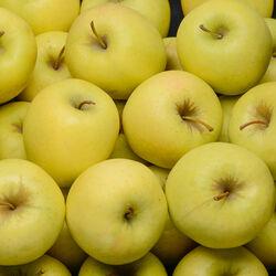 Pomme golden délicious bio vrac calibre 170/240 France