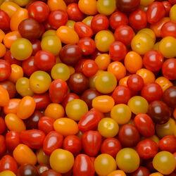 Tomate cerise, segment Les cerises rondes, mélange, catégorie Extra, France