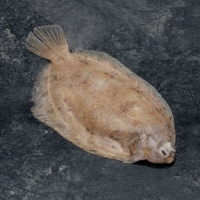 Limande sole, Microstomus kitt, vidée, calibre 180/350g, Bretagne, pêché en Atlantique Nord Est