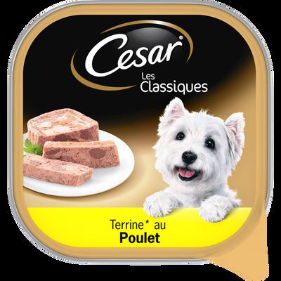 CESAR les classiques terrines au poulet pour chien, barquette de 300g