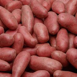 Pomme de terre nouvelle récolte Chérie, de consommation à chair ferme,calibre 35/55mm, catégorie 1, France