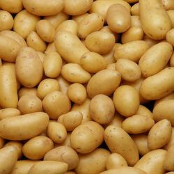 Pomme de terre grenaille Gourmandine, De consommation à chair ferme, Calibre 15/35mm, Catégorie 1, Normandie
