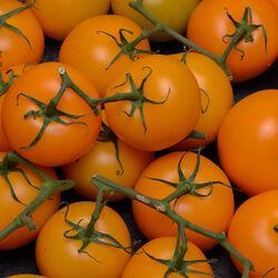 Tomate ronde en grappe, segment Les grappes, orange, catégorie 1, France