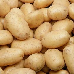 Pomme terre Annabelle nouvelle récolte, de consommation à chair ferme,calibre 35/55mm, cat.1, France
