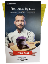 Semence Violet Sun CHR 25 plants calibre 28/35