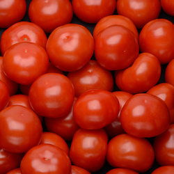 Tomate ronde, Segment Les Rondes, BIO, cal.57/67, catégorie 2, France