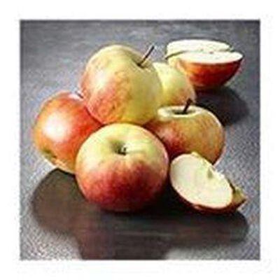 Pomme Elstar origine hollande categorie 1 variete elstar