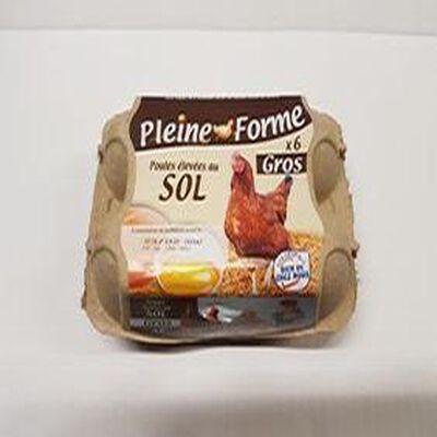 oeufs x6 de poules élevées au sol
