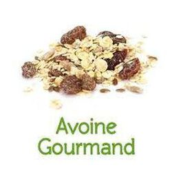 Avoine gourmand bio